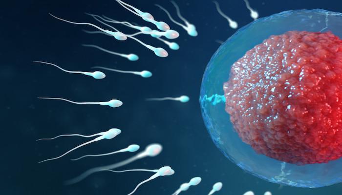 sperm sayısı